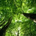 niseko green